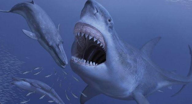 La balena di Pizzo forse vittima di uno squalo 7 milioni di anni fa – VIDEO