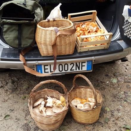 20181102 Serra San Bruno – Abbondante raccolta di funghi