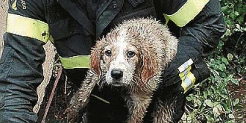 Cagnolini salvati dai vigili del fuoco a Pizzo