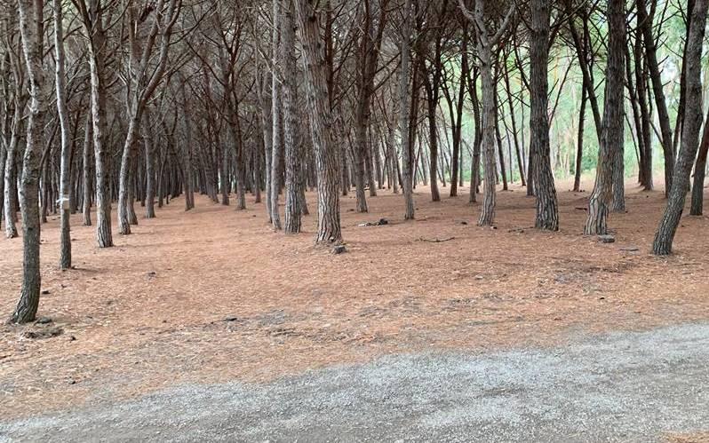 Rifiuti nella pineta di Colamaio a Pizzo, un gruppo di cittadini la ripulisce