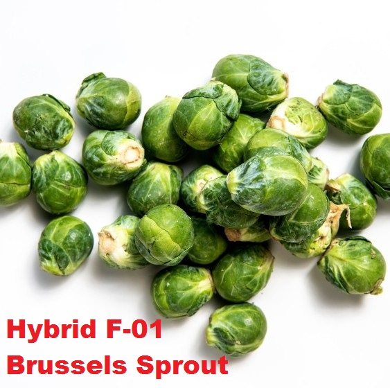Hybrid F-01 Brussels Sprout Seeds