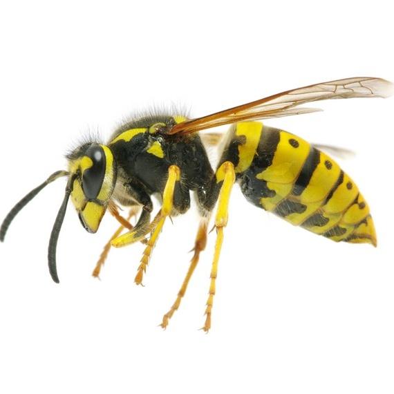 ตีผึ้ง