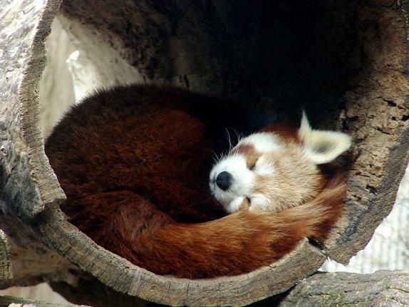 Firefox 4.0, la première beta