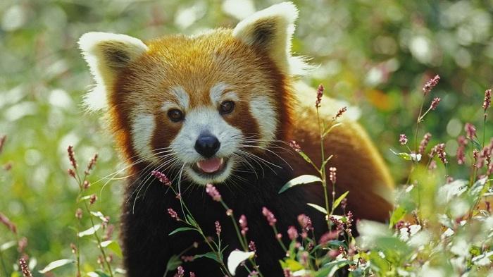 Firefox 9 est disponible en version beta