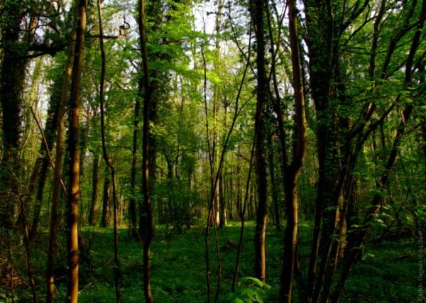 écosystème forêt