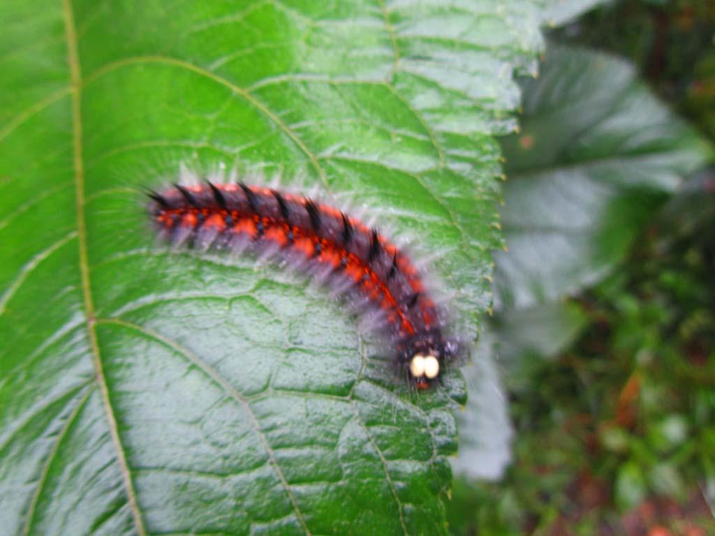 biodiversidad Mashpi