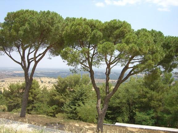 Ausblick vom Castel del Monte