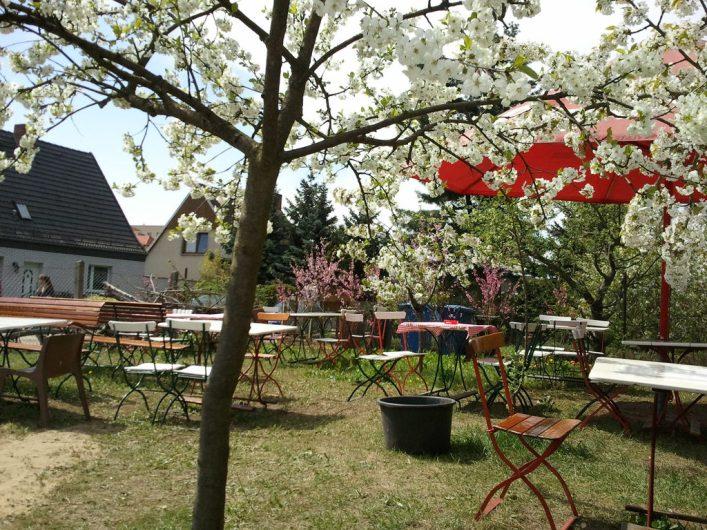 Garten mit blühenden Obstbäumen beim Baumblütenfest in Werder