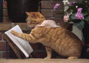 gatto-lettore