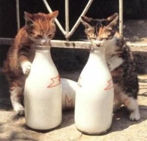 latte gatti