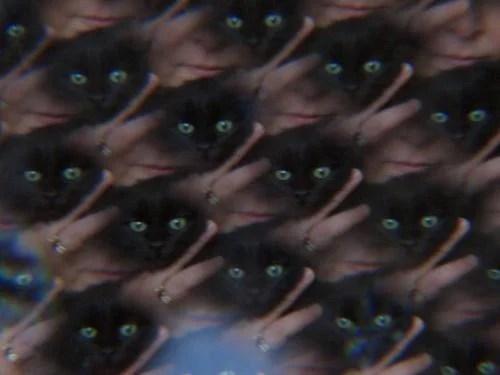 Perché Si Crede Che Il Gatto Nero Porti Sfortuna Mentre è Vero L