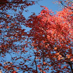 Rita Mosiman Presents - Autumn