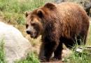 Магаре и кон са убити от мечка