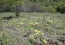 Невероятно! От обезлюдено преди близо 100 г. село са оцелели… градинските цветя