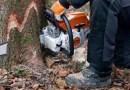Дърво уби 33-годишен мъж от Чепеларе