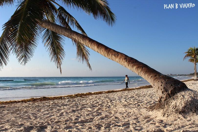 plan b viajero , playa paraiso tulum , palmera playa paraiso