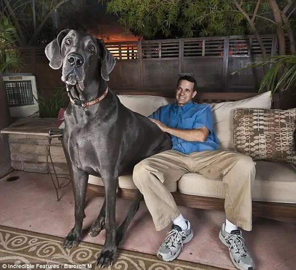 perro-grande-mundo