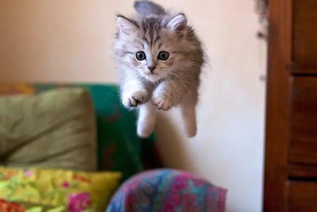 gato-saltando