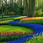 Consejos útiles para el diseño de jardines