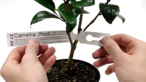 cuidado de plantas según etiqueta