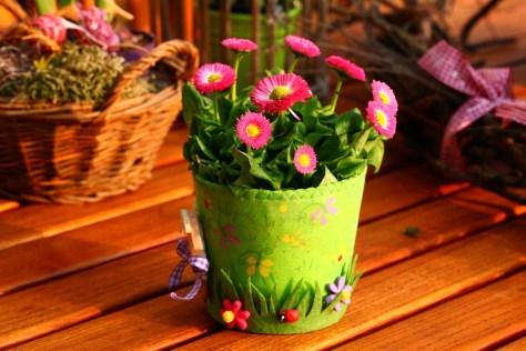 cuidado de plantas, cada planta tiene su lugar