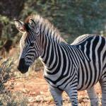 """Win a Family Safari for Four in """"Monkey See, Monkey Do"""" African Safari Contest"""