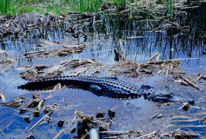 Treasure Coast Florida Blue Cypress Lake
