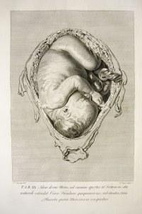 Womb baby meditation