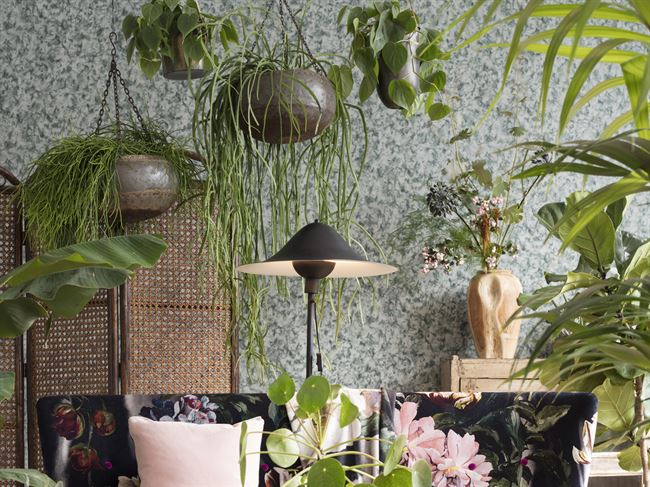 les plantes font le d 233 cor planete deco a homes world