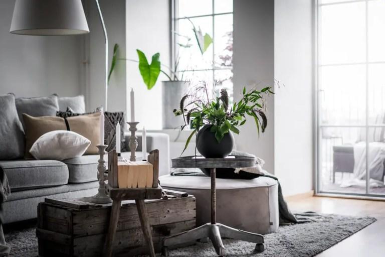 Las plantas como foco de decoración