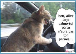 le-permis-de-conduire