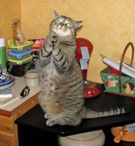 Le plaisir de donner des soins Reiki aux chats !