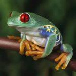 grenouille-couleurs-karuna