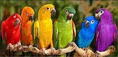 péruches-couleurs-arc-en-ciel