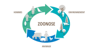 zoonose planete animale seignosse