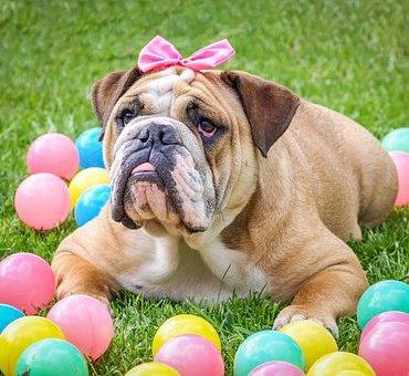 Cani Jeux Jouets pour chiens