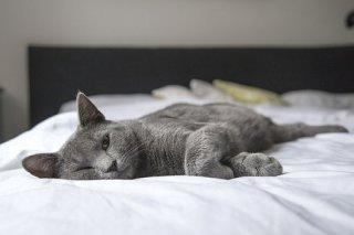 Corbeille pour chats