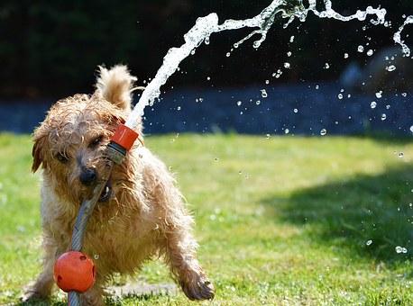 chien qui aime l'eau