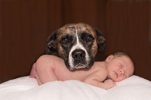 adopter un chien et enfant