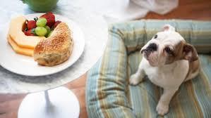 aliments néfastes pour chiens et chats