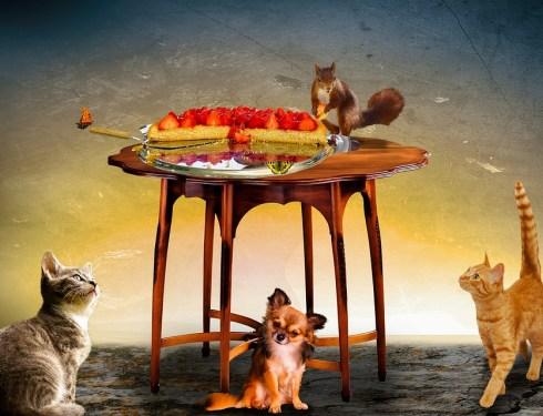 gourmandises pour animaux