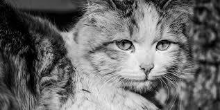 l'histoire des chats