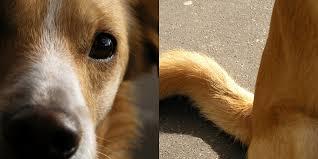 langage du chien