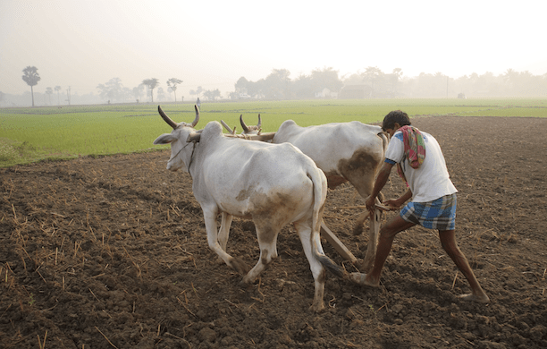 Farmer in India. (Source: Creative Commons)