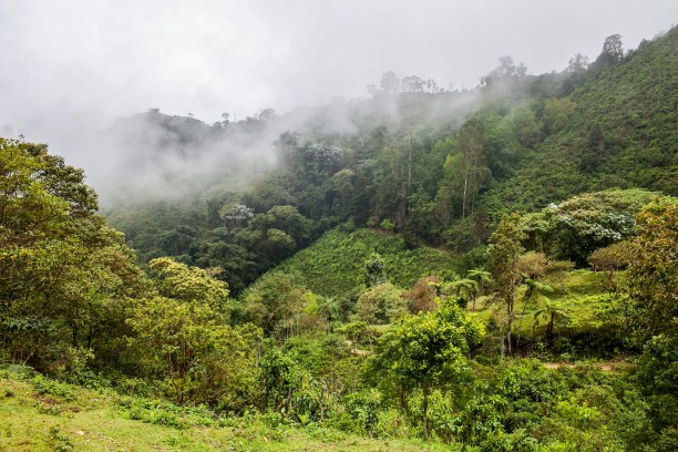 Forest in the Cauca Valley, Cali, Colombia (Photo: The Nature Conservancy)