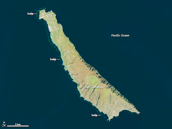 San Clemente, one of the Channel Islands off the southern California coast. This image was taken by the Landsat 8 satellite on December 23, 2013. Note the thick kelp forests along the coasts. (Source: NASA Earth Observatory)