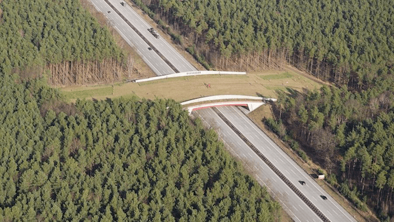A wildlife overpass on Highway 93 (Image via Big Think)