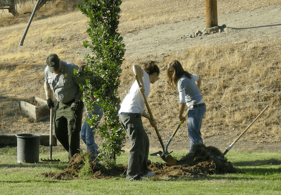 Planting a tree (Image: WikiMedia Commons)