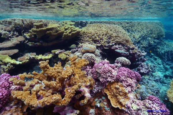 The sequestration of carbon by corals inspired Blue Planet's cement additives made from waste CO2 streams. (Image Credit: USFWS Pacific Region / Flickr)