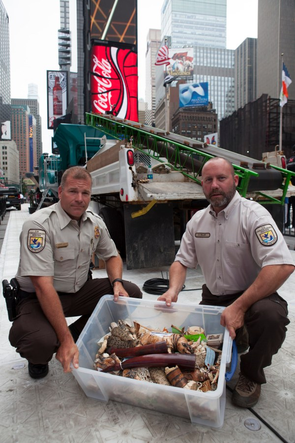 U.S. Government and conservation partners get ready to destroys more than a ton of ivory in Times Square. In this photo, USFWS officials prepare ivory for crushing. (Image Credit: IFAW / Flickr)